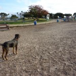Eli at the dog park 4-11 (c) 2011 April Halprin Wayland, all rights reserved