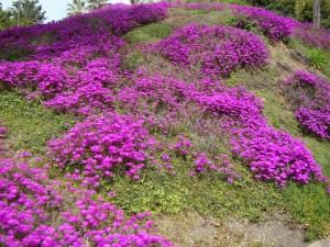photo courtesy of www.gro-O.com