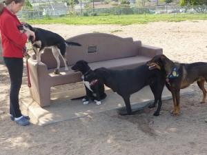 dog park 4-24-12 (26)