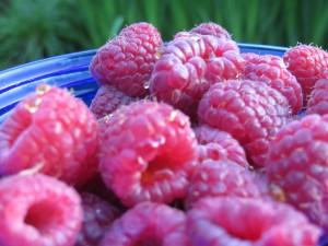 raspberries (5)