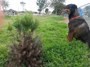 tree in dog park (4)